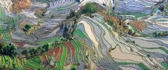 Dal campo a Bruxelles, la resilienza dell'agricoltura