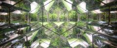 Nuovi corpi intermedi green crescono