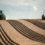 Land Grabbing, un focus sull'Africa