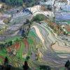 Terrace_field_yunnan_china_denoised