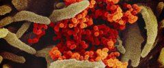 Il coronavirus è uguale per tutti?