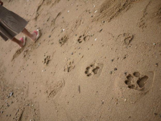 impronte-sabbia