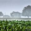 agricoltura-pioggia