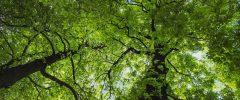 Con le Semplificazioni ci rimette la tutela ambientale