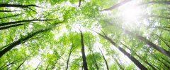 Foreste, Eni e contabilità furbette